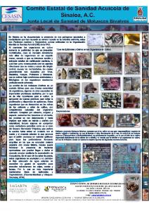 POSTER ENFERMEDADES Y EPIBIONTES DE MOLUSCOS BIVALVOS EN SINALOA