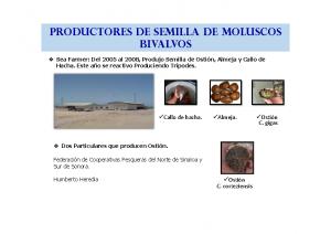 PRODUCTORES DE MOLUSCOS