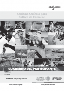 CAMARÓN Cuaderno del participante julio 2017